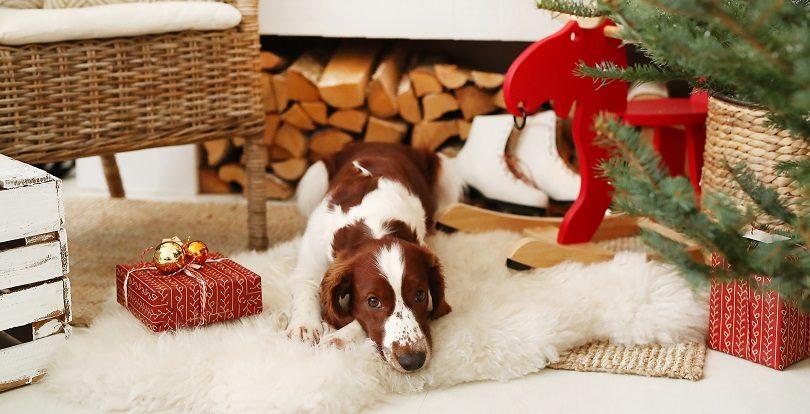 Как сделать ремонт в квартире, имея домашнее животное?